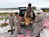"""Hồi sinh vùng """"đất chết"""" - thành quả từ hợp tác Việt Nam - Hoa Kỳ"""