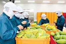 Đến 2030, giá trị kim ngạch xuất khẩu rau quả đạt 8-10 tỷ USD